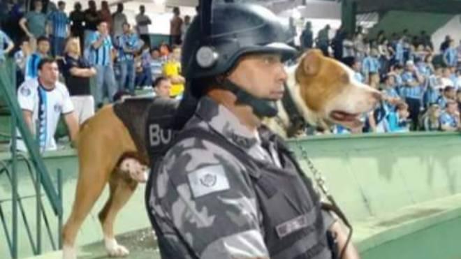 Pit bull Rock com o soldado Luiz Fernando Cruz, com quem atuou na PM: cachorro era o terror dos encrenqueiros nos estádios.