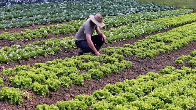 Estima-se que o número de produtores orgânicos seja ainda maior do que o indicado pelos índices oficiais