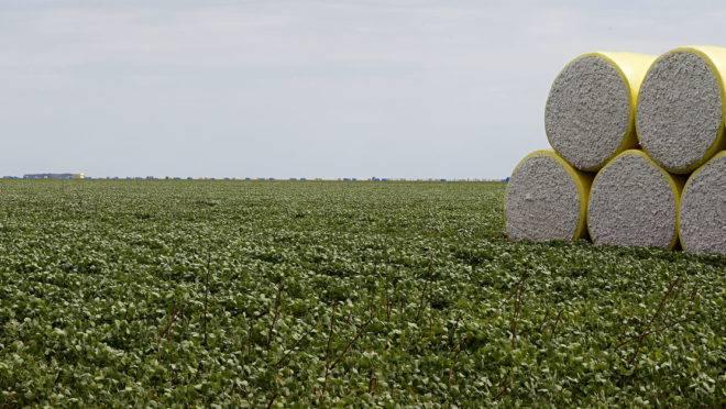 Os destaques ficaram por conta do cultivo de milho, algodão e soja