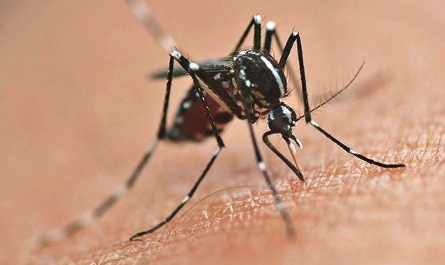 Aedes aegypti: STF discute constitucionalidade do uso de aeronaves para combater o mosquito.