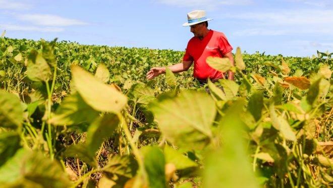 EXPEDIÇÃO SAFRA 2018/2019 – CHAPECÓ-SC – Flávio Fonseca da Rosa, agricultor e produtor