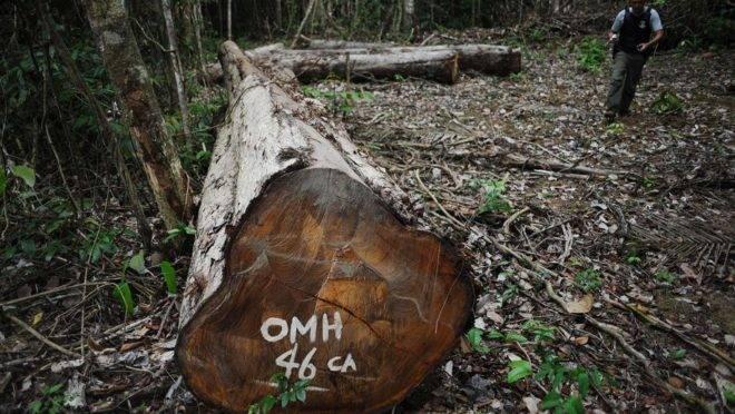 Flagrante de autuação por desmatamento na Amazônia