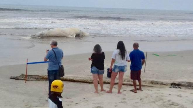 Pessoas observando baleia morta na beira da praia