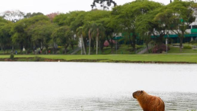 Depois de recorde de calor, Curitiba terá tempo nublado nesta quarta.