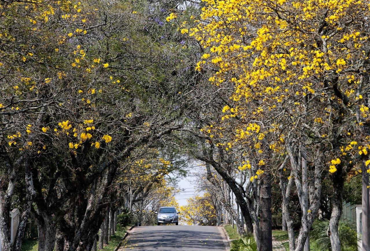 A esquina entre as Ruas Padre Germano Mayer e Dr. Goulin. Foto: Aniele Nascimento / Gazeta do Povo
