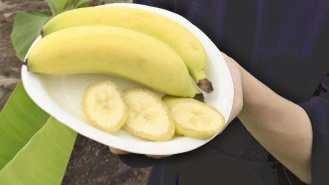 TVariedades de bananas que vão ser produzidas em Niigata podem ser consumidas com casca e tudo