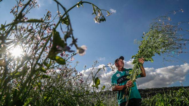 O agricultor familiar Adilson Bordignião usa o plantio direto há um ano, com bons resultados na produção
