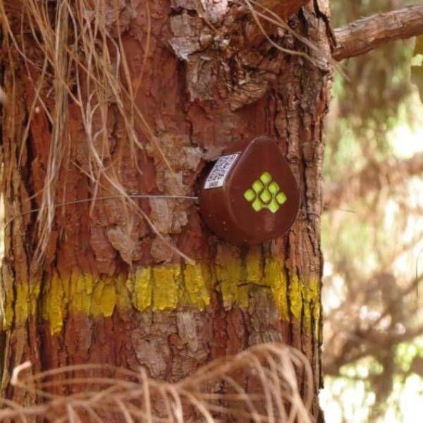 Aparelho da Treevia monitora a floresta em tempo real. Foto: Divulgação.