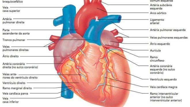 Imagem MARIEB, E. N.; HOEHN, K. Anatomia e fisiologia. 3ª ed. Porto Alegre: Artmed, 2009