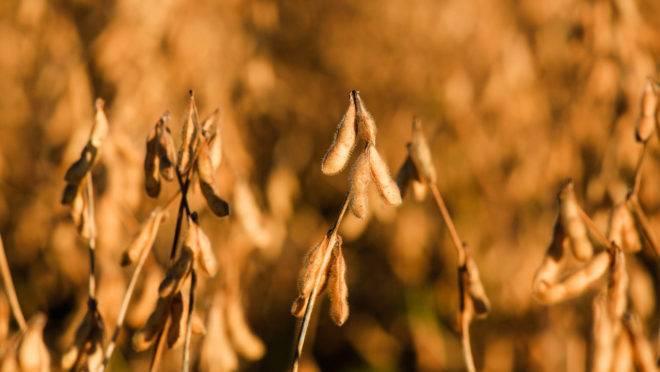 A discussão sobre a soja transgênica, segundo consta no processo, envolve cerca de R$ 15 bilhões