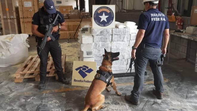 Cão farejador detectou a carga de 1,3 tonelada de cocaína que embarcaria para a Bélgica.