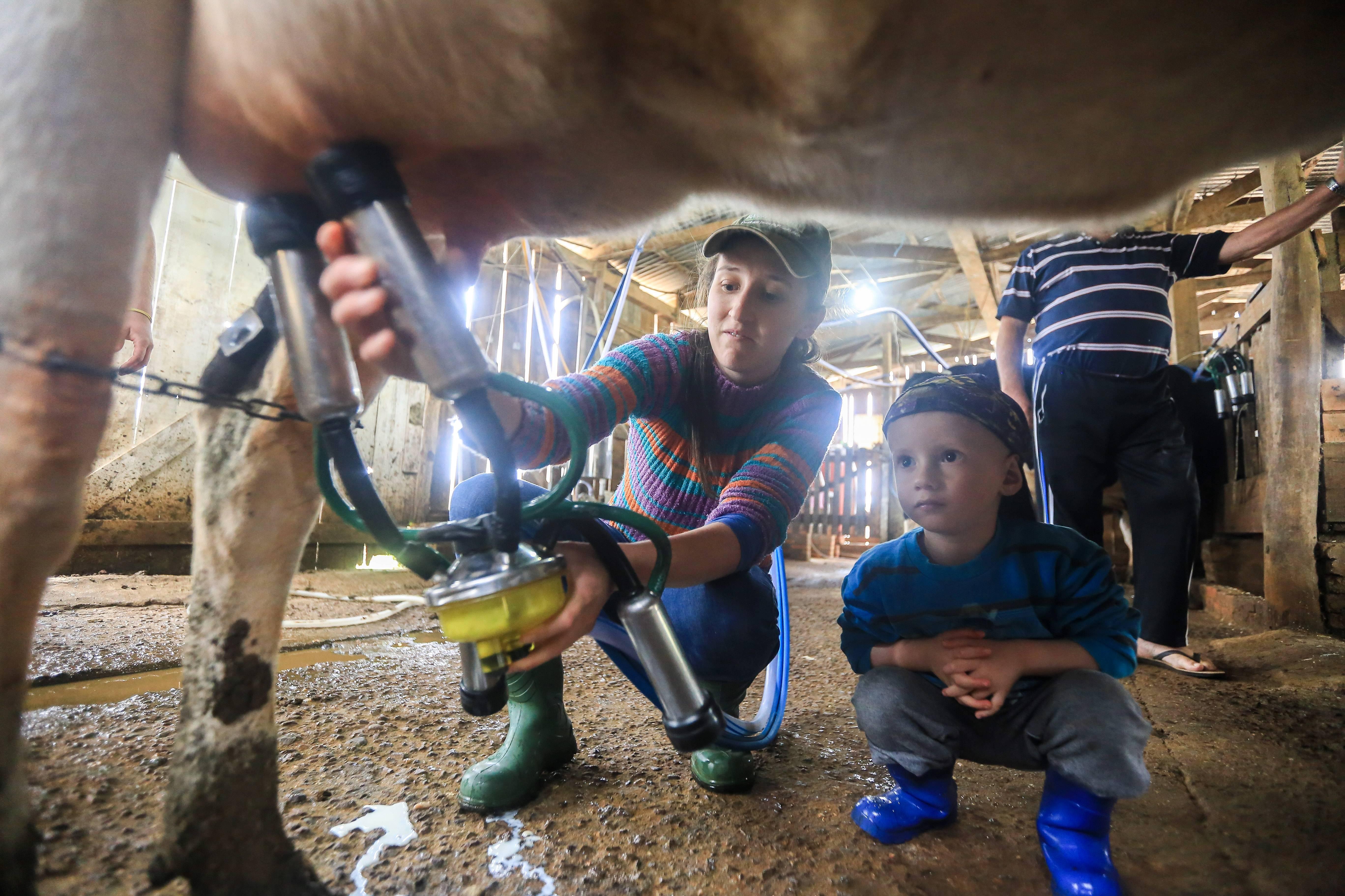 Família Fioreze também aposta na produção de leite. Atividade está em crescimento, mas cadeia da soja ainda domina na região de Soledade (RS).<br />
