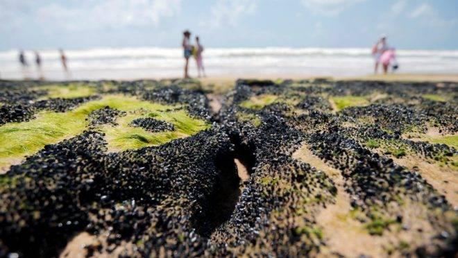 Poluente se espalha pelo litoral nordestino desde o início de setembro e já atinge 187 pontos