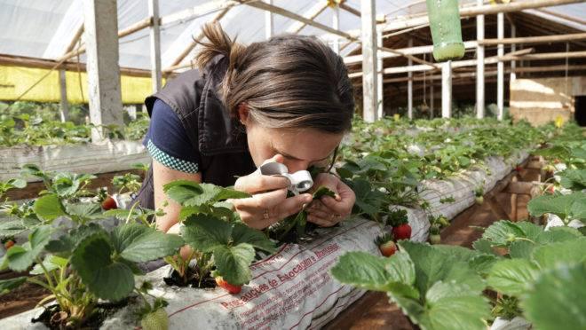 Assistência técnica nas propriedades é uma das principais reivindicações da agricultura familiar