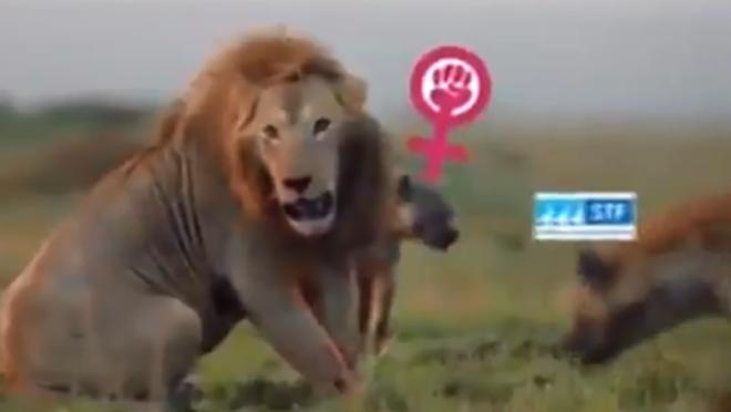 Trecho do vídeo em que Bolsonaro, comparado a um leão, é atacado pela hiena do STF.