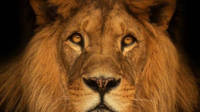 Leão ,imposto
