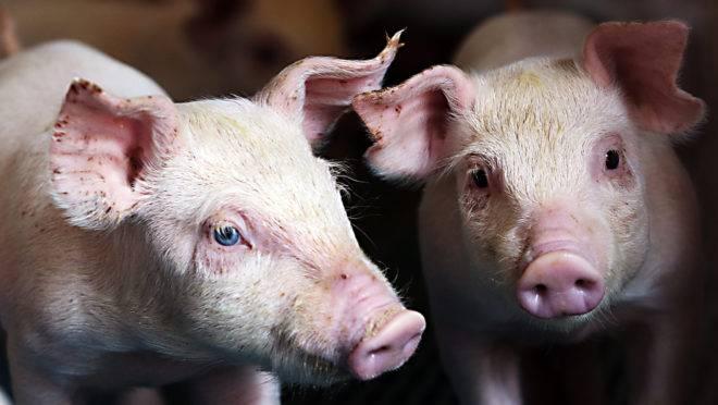 A China suspendeu os embarques de carne do país em junho