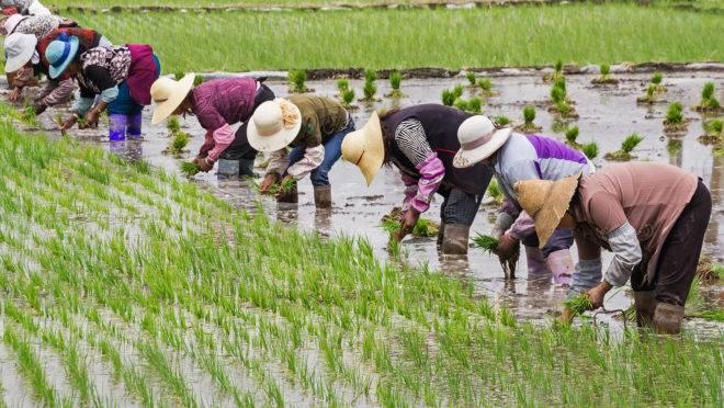 O intuito é impulsionar a produção de grãos e garantir a segurança alimentar do país