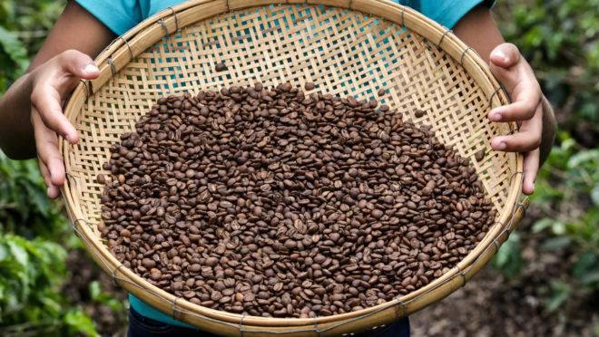 Mais de 1,2 mil fazendas, a maioria mineiras, fornecem café para a Nespresso no país