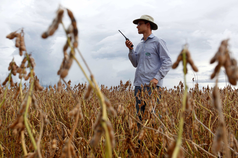 Apenas 20% das propriedades rurais do país contam com assistência técnica, o que dá uma ideia de como o setor agrícola precisa de profissionais habilitados.