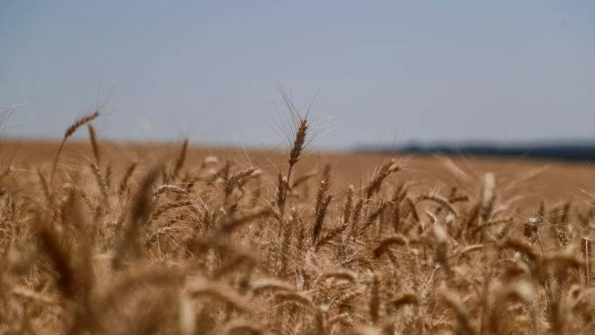 Anteriormente, o IGC já reduziu sua perspectiva para grãos como resposta à seca na Austrália