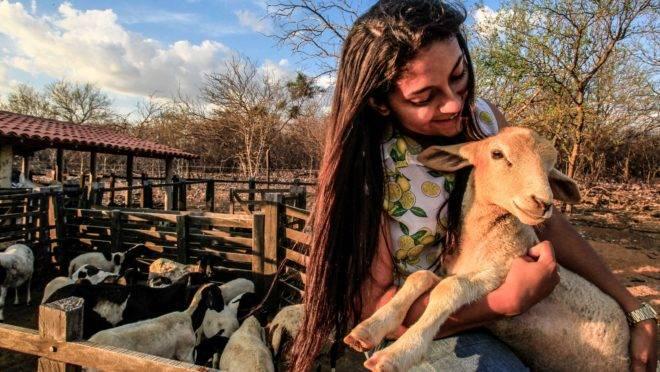 Francisca, de apenas 23 anos, é presidente da Ascobetânia (Associação de Criadores de Caprinos e Ovinos de Betânia do Piauí. Segundo ela, graças ao associativismo os produtores da região conseguiram organizar a comercialização dos animais e melhorar a renda.