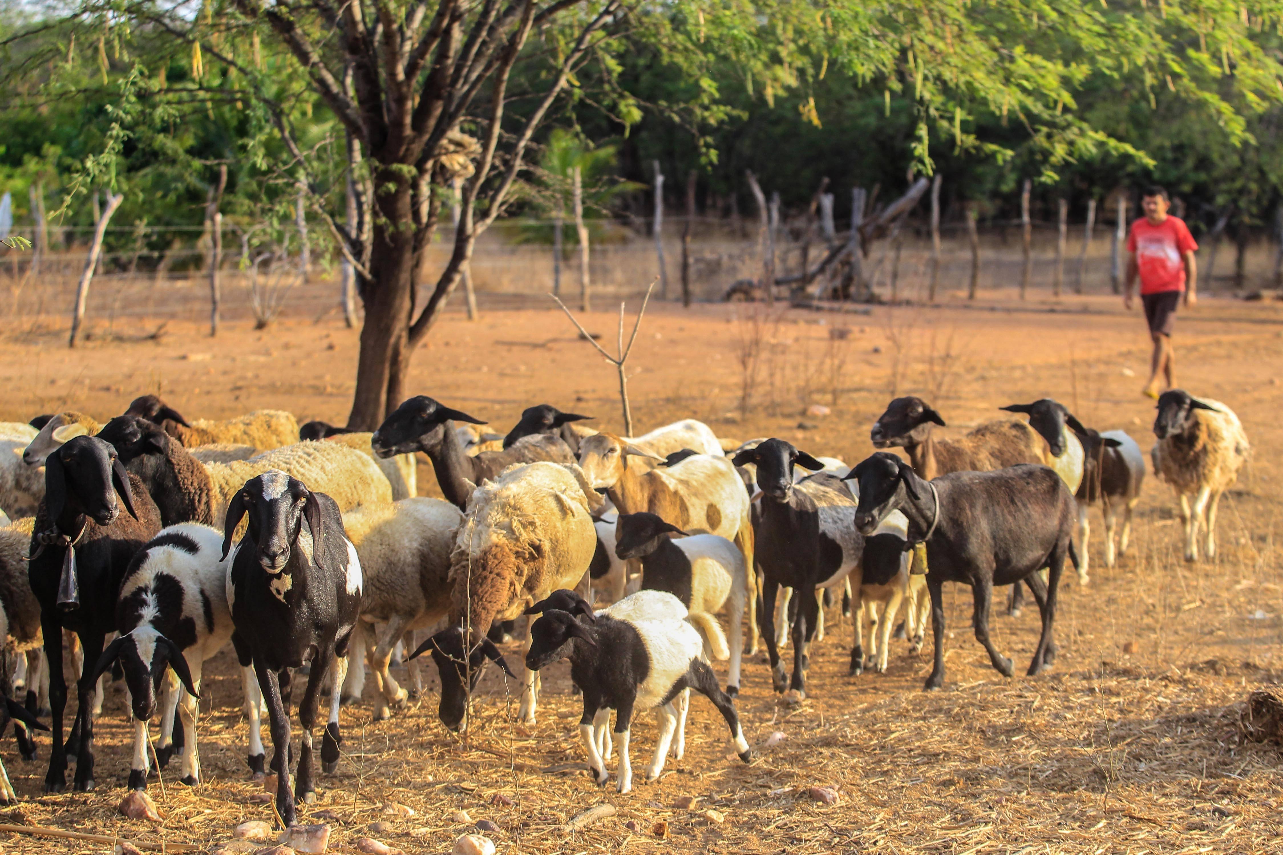 Expedição Agricultura Familiar, em Betânia do Piauí. Foto: Rogério Machado/Gazeta do Povo