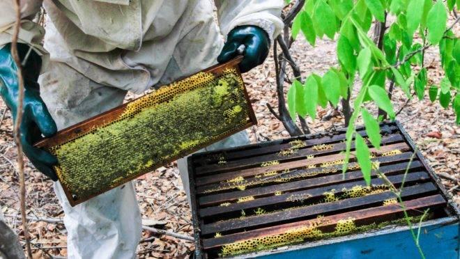 """O mel cultivado na Caatinga virou item de exportação no Piauí. Europa e América do Norte estão interessadas no """"ouro do Semiárido"""""""