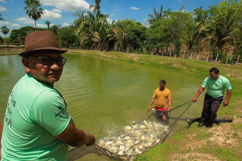 """Elias Cruz, de Nazária (PI): """"Eu teria capacidade de produzir mais, porém não tenho para quem vender por um preço que seja justo"""", diz o produtor. Foto: Rogério Machado/Gazeta do Povo"""