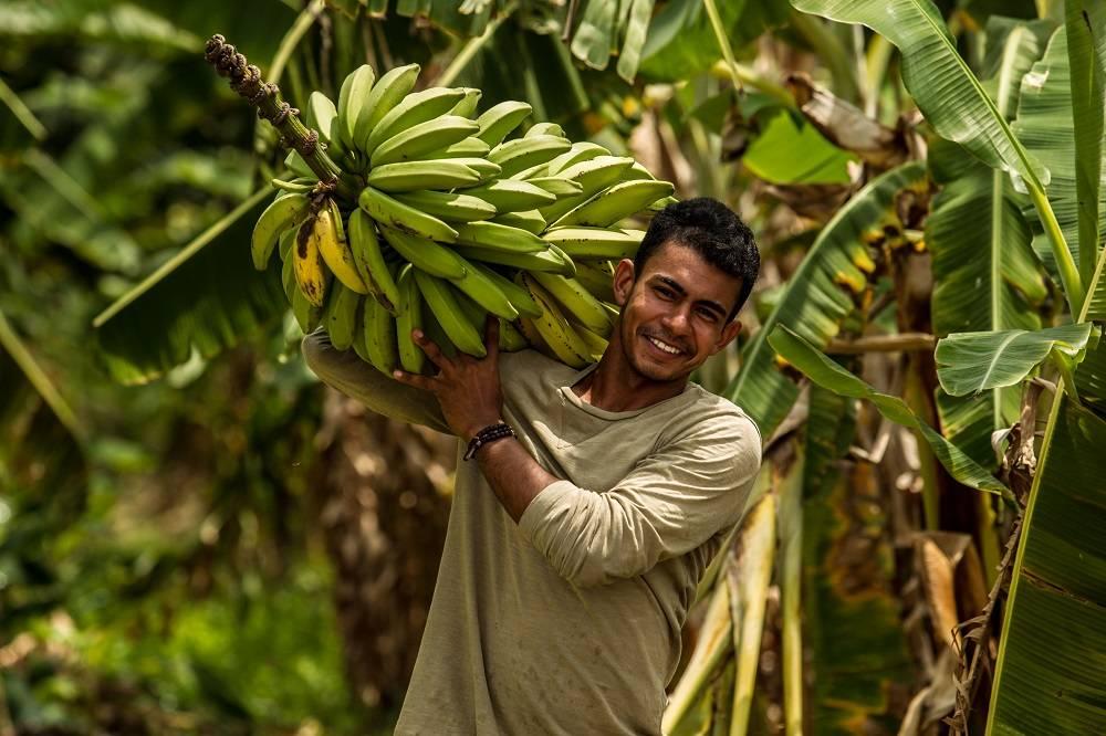 Valney Silva Soares, produtor de Delmiro Gouveia (AL) está rindo à toa com a boa produtividade da banana e macaxeira, graças às boas práticas agrícolas e à água oriunda do Canal do Sertão. Foto: Rogério Machado/Gazeta do Povo