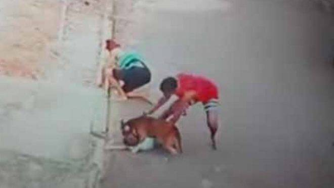 Jovem salvou menino que estava sendo atacado por cachorro no Rio de Janeiro