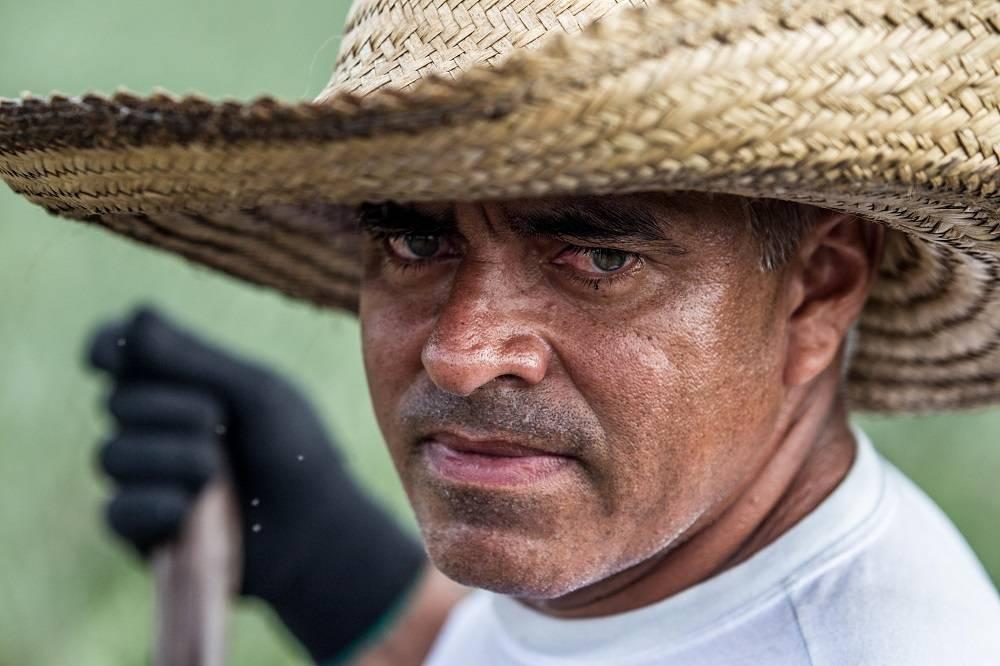 Fábio Leandro da Silva tem 400 mil pés de abacaxi plantados. A mecanização da lavoura ajudou a aumentar a produção. Foto: Rogério Machado/Gazeta do Povo