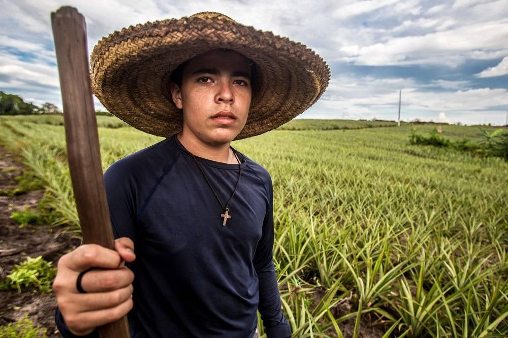 """Fabrício da Silva, de 15 anos, já ajuda o pai na lavoura de abacaxi. """"Já tentaram produzir esse abacaxi em outros lugares, mas não deu certo"""", diz o jovem. Foto: Rogério Machado/Gazeta do Povo"""
