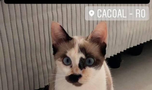 Publicação de gata desaparecida compartilhada no site da deputada Jaqueline Cassol