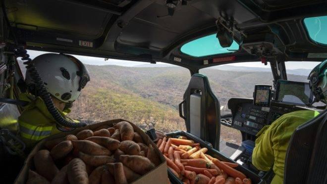Alimentos são lançados a animais na Austrália