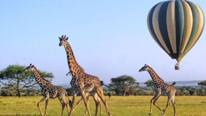 Os hóspedes visitarão quatro destinos africanos icônicos. (crédito: divulgação/ROAR AFRICA).