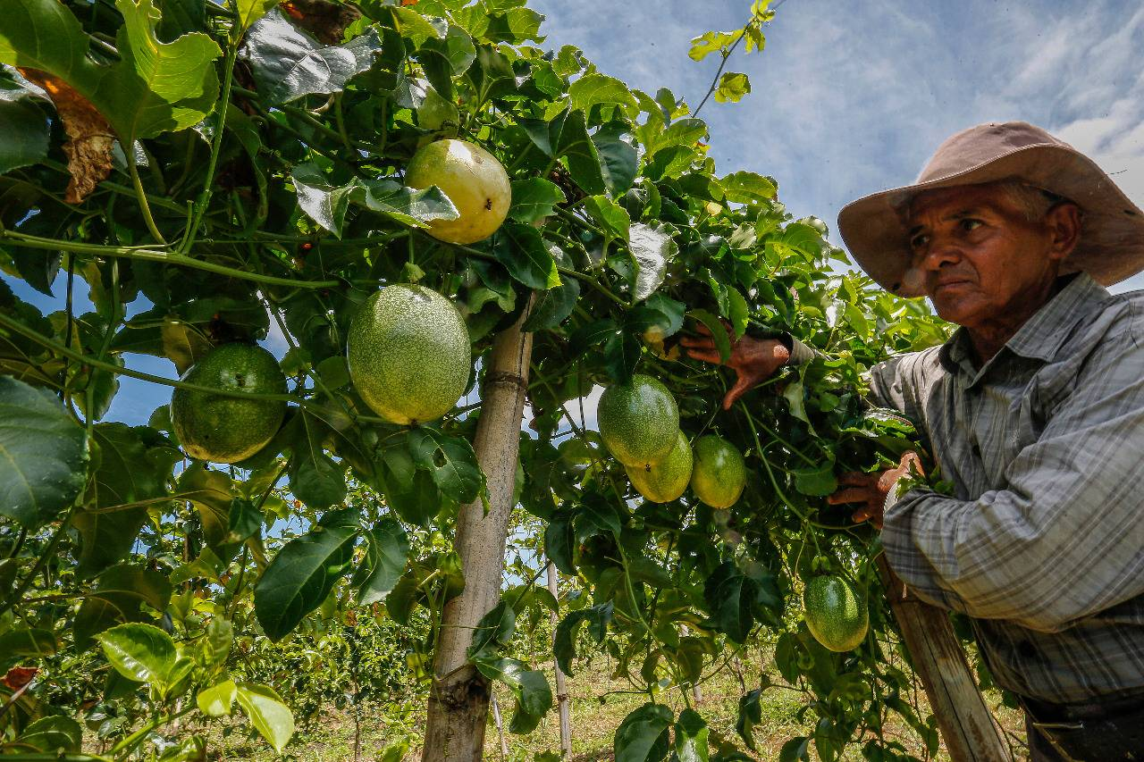 José Domingues consegue vender maracujá e pitaya diretamente para a população por meio de um sacolão criado pela Cooperu.