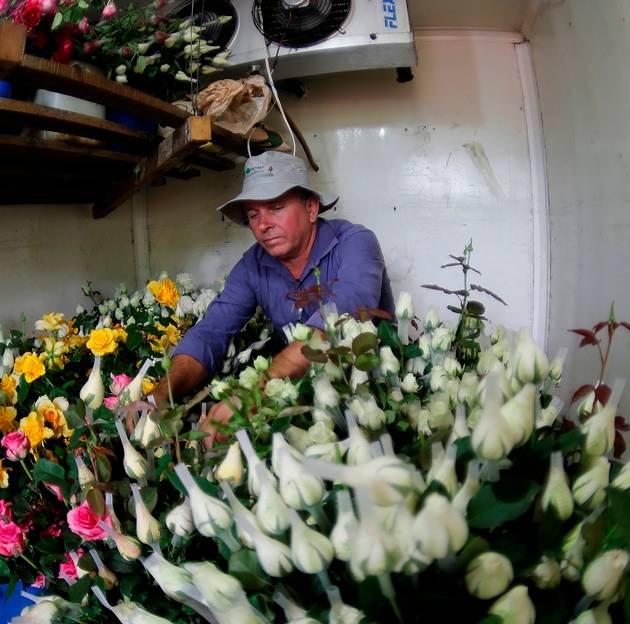 Família improvisou um caminhão baú em câmara frigorífica para preparar as rosas para as vendas.