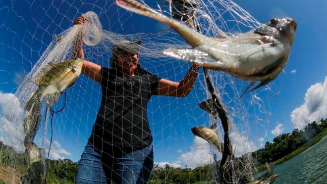 Glasielli e o irmão continuam a produção  de peixes, iniciada pelo pai há 25 anos, em Carlópolis.