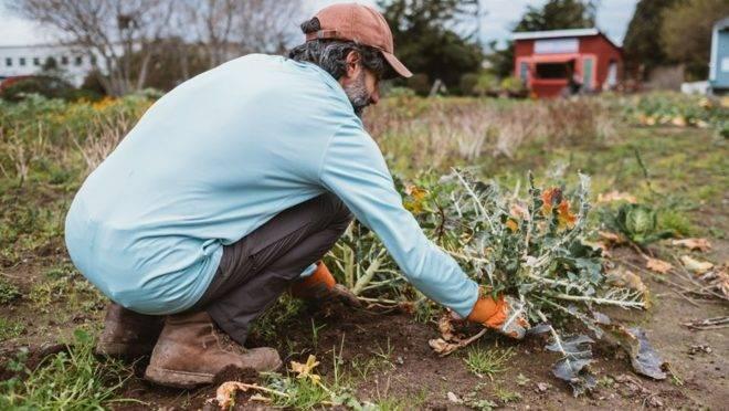 Através da agricultura, projeto nos EUA ajuda desabrigados a saírem das ruas