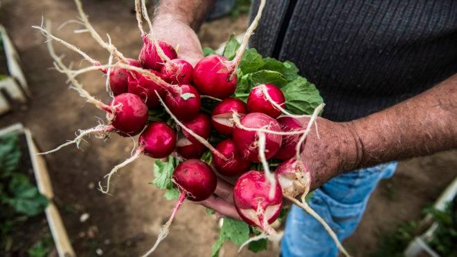 Salva de palmas a todos os que plantam, colhem, vendem e transportam o alimento nosso de cada dia.