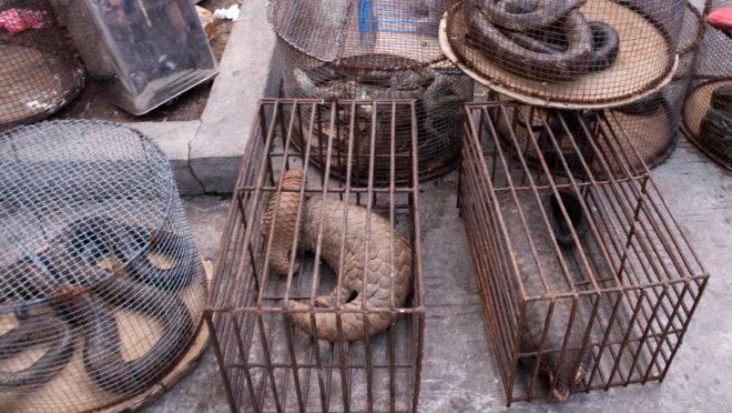 Apesar do coronavírus, os mercados de animais silvestres da China não desapareceram. E eles serão a fonte provável de muitas pandemias futuras.