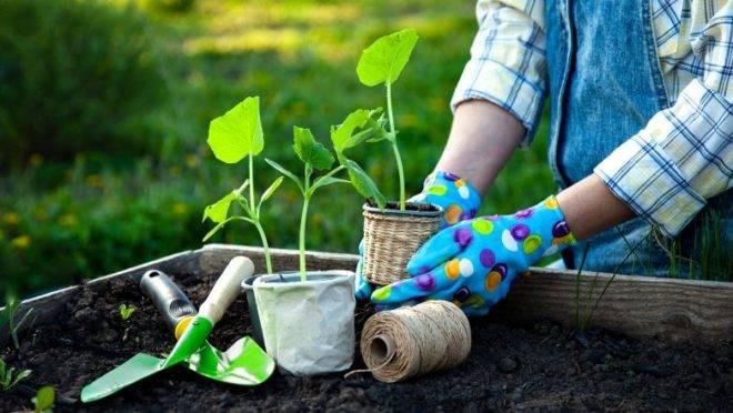 10 dicas de jardinagem para colocar em prática na quarentena