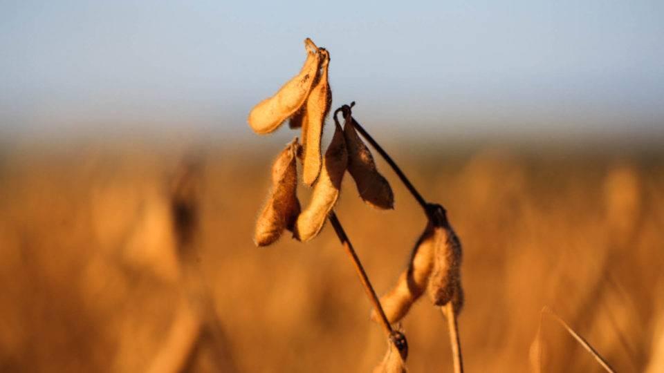 Agronegócio: o que se pode aprender com o setor mais resiliente da década?