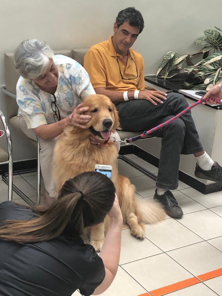 Thor, Golden Retriever de Emilio, em exemplo de terapia com pets. Foto: Arquivo pessoal