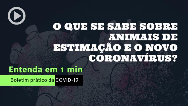 Animais de estimação e o novo coronavírus: o que se sabe até agora. A recomendação é manter as mesmas restrições feitas a humanos, limitando as saídas.