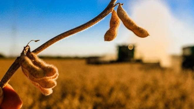 Deral prevê safra de soja de 20,7 milhões de toneladas no Paraná, a maior da história do estado