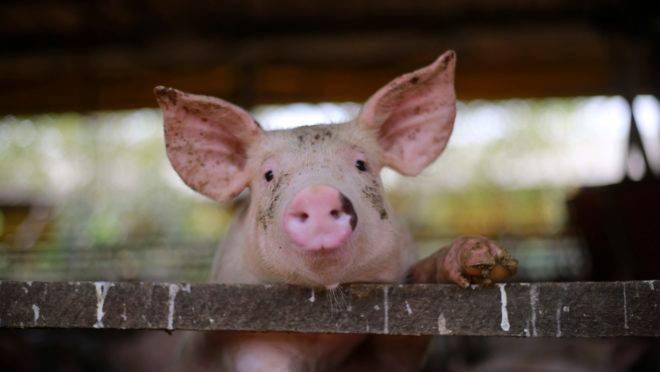 No agronegócio, produção de proteína animal e de grãos registra ganhos com exportações.