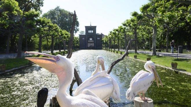 Pelicanos invadem jardim zoológico e botânico de Wilhelma, em Stuttgart,  em 20 de maio de 2020, em meio à pandemia de coronavírus Covid-19.