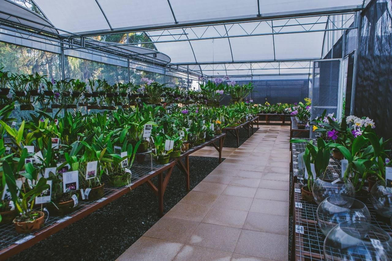 Orquidaria Rosita tem plantas a partir de R$ 40.